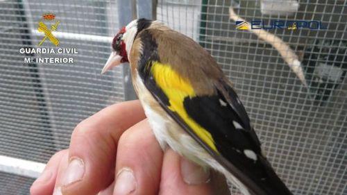Cae una organización internacional dedicada al comercio ilegal de especies de aves