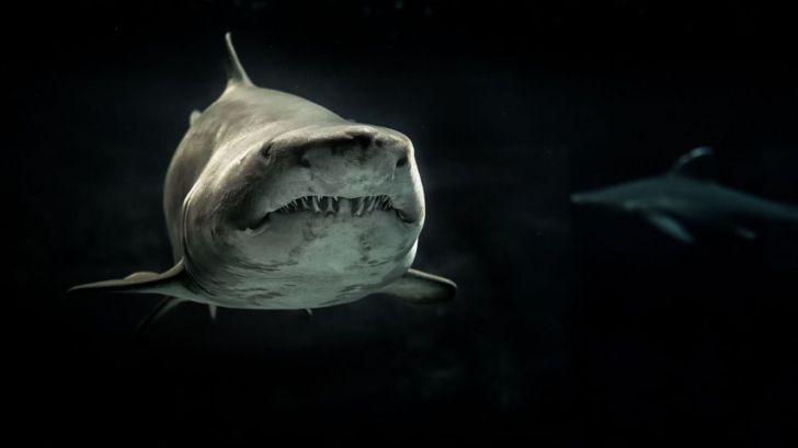 Curiosidades de la naturaleza: tiburones especiales