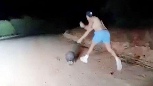 Mata a pedradas a un wombat y lo sube a las redes sociales