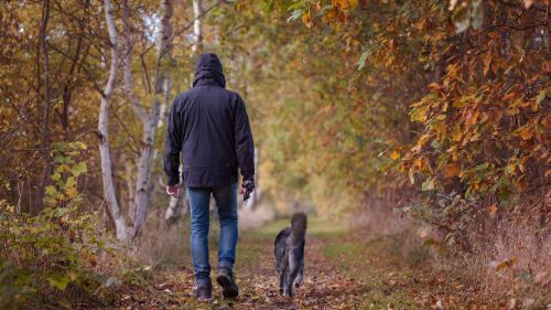 Localizado tras alquilar a sus perros para sacarlos a pasear durante el Estado de Alarma
