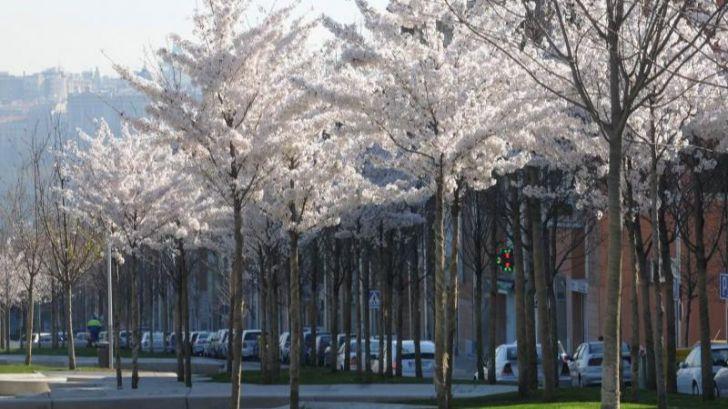 ¿Más árboles para evitar cientos de muertes prematuras al año?