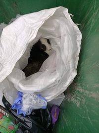 Rescatado un perro tras ser arrojado dentro de una bolsa a un contenedor