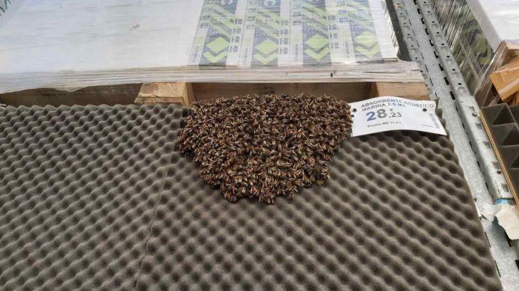 Evacúan una tienda por un enjambre con más de 3.000 abejas
