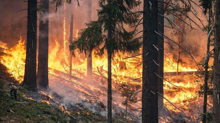 Los incendios queman un 45% menos hasta mayo en España respecto a la última década
