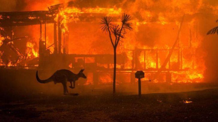 WWF alerta de una pandemia mundial de incendios forestales como 'nueva normalidad'