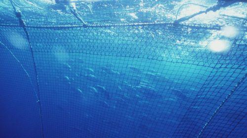 Greenpeace pide la intervención de la ONU para esclarecer el asesinato de un observador pesquero
