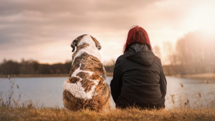 Viaja con tu mascota a cualquier parte