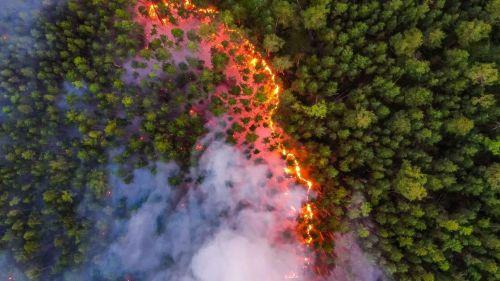 Un 'megaincendio' continúa arrasando los bosques de la taiga siberiana