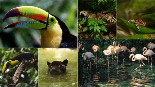 El 1% de la superficie del mundo acoge el 12% de la biodiversidad del planeta