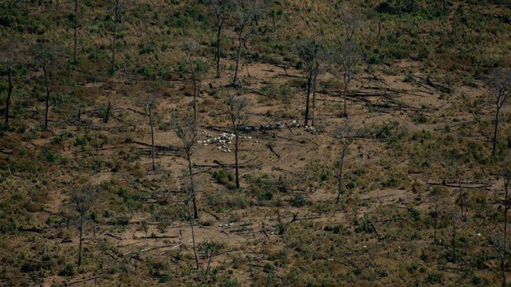 Un año desde el gran fuego que asoló la Amazonía