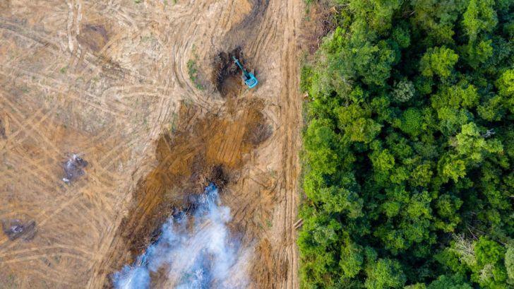 'No te comas el bosque': Una campaña para evitar la deforestación importada en la UE