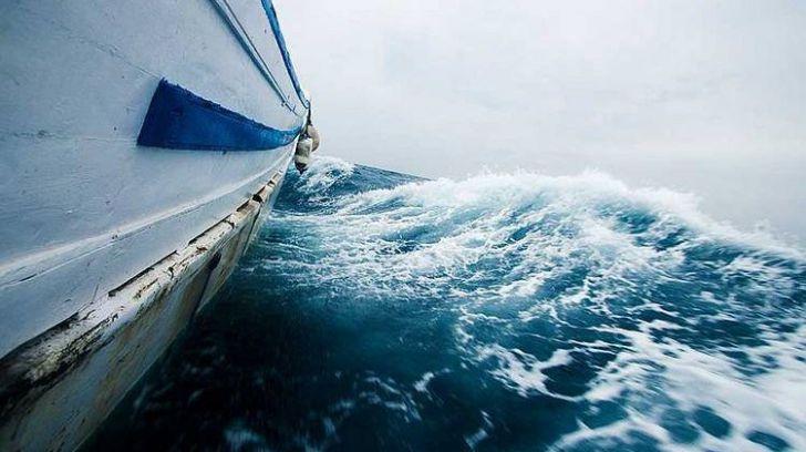 España es responsable de la mitad de las capturas del amenazado tiburón marrajo