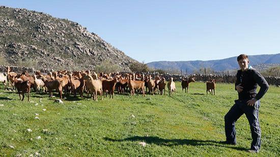 Joven ganadero en El Barraco (Ávila)