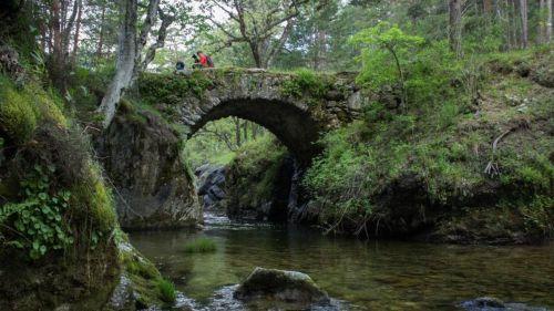 Solicitan la expropiación del Pinar de los Belgas y su inclusión en el Parque Nacional de Guadarrama