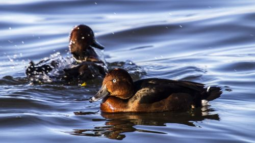 Tres joyas ornitológicas 'olvidadas a su suerte'