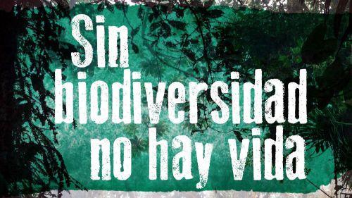 El Gobierno español 'infravalora la pérdida de biodiversidad'