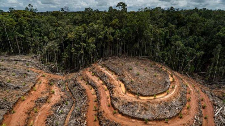 'No te comas el bosque': Hacia una ley europea contra la deforestación
