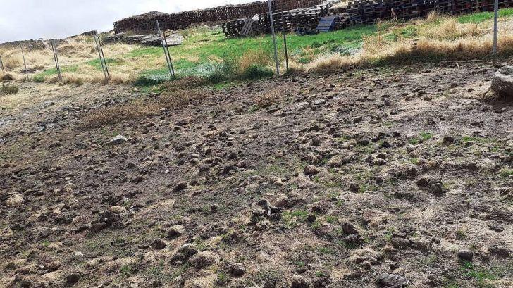 WWF denuncia a la granja de visón americano de Peguerinos por un vertido contaminante