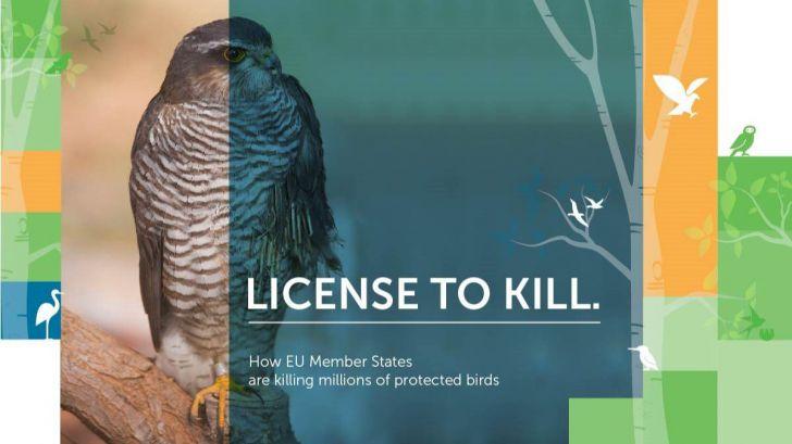 BirdLife advierte que 14 millones de aves mueren por 'excepciones'