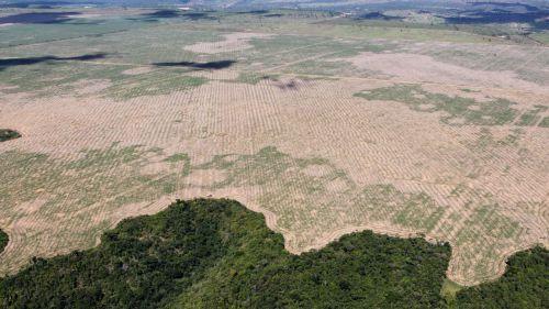 En solo un año la selva amazónica ha perdido una superficie equiparable a un millón y medio de campos de fútbol