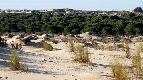 La Abogada General del Tribunal de Justicia de la UE considera que España infringe la legislación en Doñana