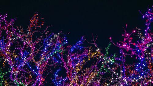 Así afectan las luces navideñas a la biodiversidad