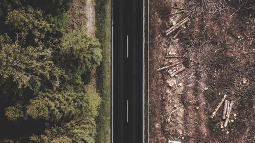 Frentes de la deforestación: Causas y respuestas en un mundo cambiante