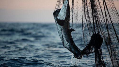 Greenpeace condena la decisión del Gobierno japonés de verter el agua contaminada de Fukushima al océano Pacífico