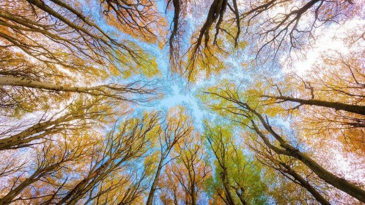 Sobre la necesidad de preservar el medioambiente para evitar pandemias