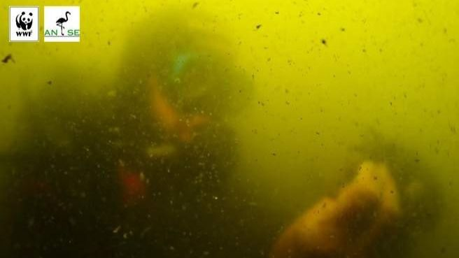 WWF constata que la vegetación del Mar Menor empieza a morir