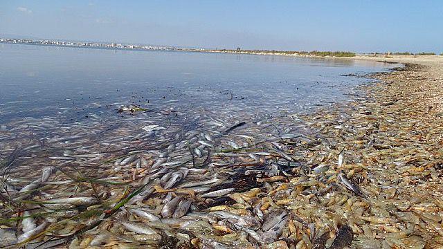 Ecologistas en Acción advierte: El Mar Menor está en peligro de desaparición