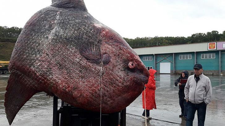 Monstruos marinos reales