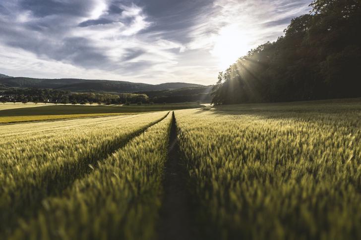Amigos de la Tierra, Ecologistas en Acción, Greenpeace, SEO/BirdLife y WWF piden compromisos reales con la transición ecológica