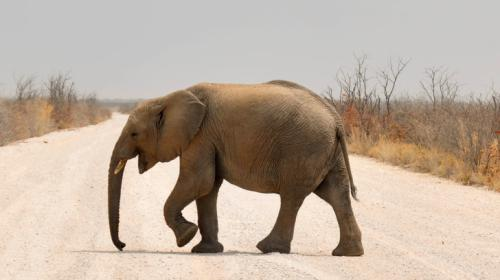 Selfie mortal: El peligro de hacerse una fotografía con un elefante