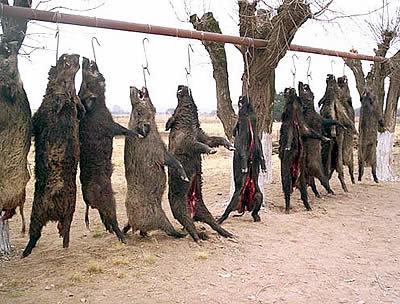 """El control de depredadores es """"contraproducente"""""""